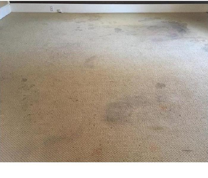 SERVPRO of Athens Carpet Cleaning Before